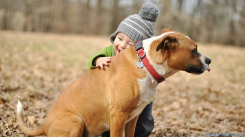 Baby With Dog In Forest,  Baby In Forest,  Dog On Forest,  Baby Holding Dog In Forest,  Baby With Dog,  Baby Holding Dog,  Baby Hugging Dog,  Baby,  Hug,  Hold,  Dog,  Playing,  Pet Animal,  Pet,  Animal,  Child,  Kid,  Infant,  Toddler,  Smiling,  Laughing,  Forest,  Outdoor,  Sitting,  Looking Away,  Side View,  Baby Wallpapers,  Animal Wallpapers,  Dog Wallpapers,  Latest,  HD,  Wallpapers,  Download,  DAW772