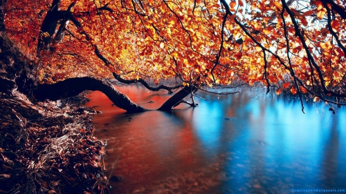Colorful Tree Branches, Reflection In Water, Reflection In lake, Tree Branches Over Lake,Colorful Tree Branches Over Lake, River, Water, Lake, Tree Over Lake, Tree, Leaves, Multi Color, Colorful, Multi Color Leaves, Colorful Leaves, Colorful Tree Branches, Reflection In Water, Reflection In lake, Tree Branches Over Lake,Colorful Tree Branches Over Lake, Scenery, Scene, Nature, Autumn, Reflection, River, Water, Lake, Tree Over Lake, Tree, Leaves, Multi Color, Colorful, Colorful Leaves, Multi Color Leaves, DAW020, Download, Wallpapers, HD, Latest, Nature Wallpapers, Scenery, Scene, Nature, Autumn, Reflection