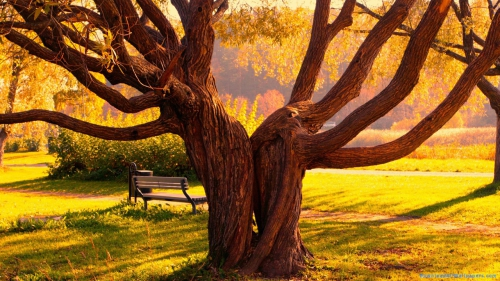 Scenery, Scene, Nature, Shadow, Sunlight, Bench, Park, Garden, Autumn, Grass, Leaves, Maple, Tree, Two, Pair, Couple, Twin, Maple Tree, Twin Tree, Twin Maple Trees, Twin Maple Trees In Autumn Garden,Twin Tree In Garden, Scenery, Scene, Nature, Shadow, Sunlight, Bench, Park, Garden, Autumn, Grass, Leaves, Maple, Tree, Two, Pair, Couple, Twin, Maple Tree, Twin Tree, Twin Maple Trees, Twin Maple Trees In Autumn Garden,Twin Tree In Garden, DAW188, Download, Wallpapers, HD, Latest, Autumn Wallpapers, Nature Wallpapers