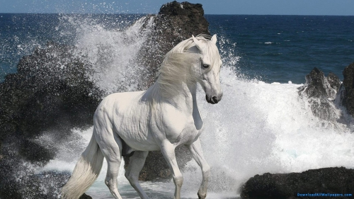 Ocean, Sea, Jumping, Dancing, Horse, White Color, Horse Dancing, White Horse, Horse On Beach, White Horse Dancing, White Horse Dancing On Beach,White Horse On Beach, Wallpapers, HD, Latest, Animal Wallpapers, Animal, Pet, Pet Animal, Water, Ocean Waves, Sea Waves, Water Splash, Stone, Rock, Waves, Beach, Ocean, Sea, Jumping, Dancing, Horse, White Color, Horse Dancing, White Horse, Horse On Beach, White Horse Dancing, White Horse Dancing On Beach,White Horse On Beach, Animal, Pet, Pet Animal, Water, Ocean Waves, Sea Waves, Beach, Waves, Rock, Stone, Water Splash, Download, DAW148