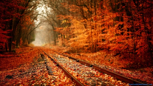 Maple Forest, Maple Tree Forest, Maple Tree, Maple, Tree, Forest, Autumn Season, Maple Leaves On Railways Track, Railroad In Maple Tree Forest,Rail Track In Autumn Forest, DAW500, Download, Wallpapers, HD, Latest, Autumn Wallpapers, Nature Wallpapers, Scenery, Scene, Nature, Autumn, Railway Track In Forest, Rail Track, Railway Track, Railway Lines, Railroad, Colorful Maple Tree Forest, Colorful Maple Tree, Colorful Forest, Maple Forest, Maple Tree Forest, Maple Tree, Maple, Tree, Forest, Autumn Season, Maple Leaves On Railways Track, Railroad In Maple Tree Forest,Rail Track In Autumn Forest, Scenery, Scene, Nature, Autumn, Railway Track In Forest, Rail Track, Railway Track, Railway Lines, Railroad, Colorful Maple Tree Forest, Colorful Maple Tree, Colorful Forest